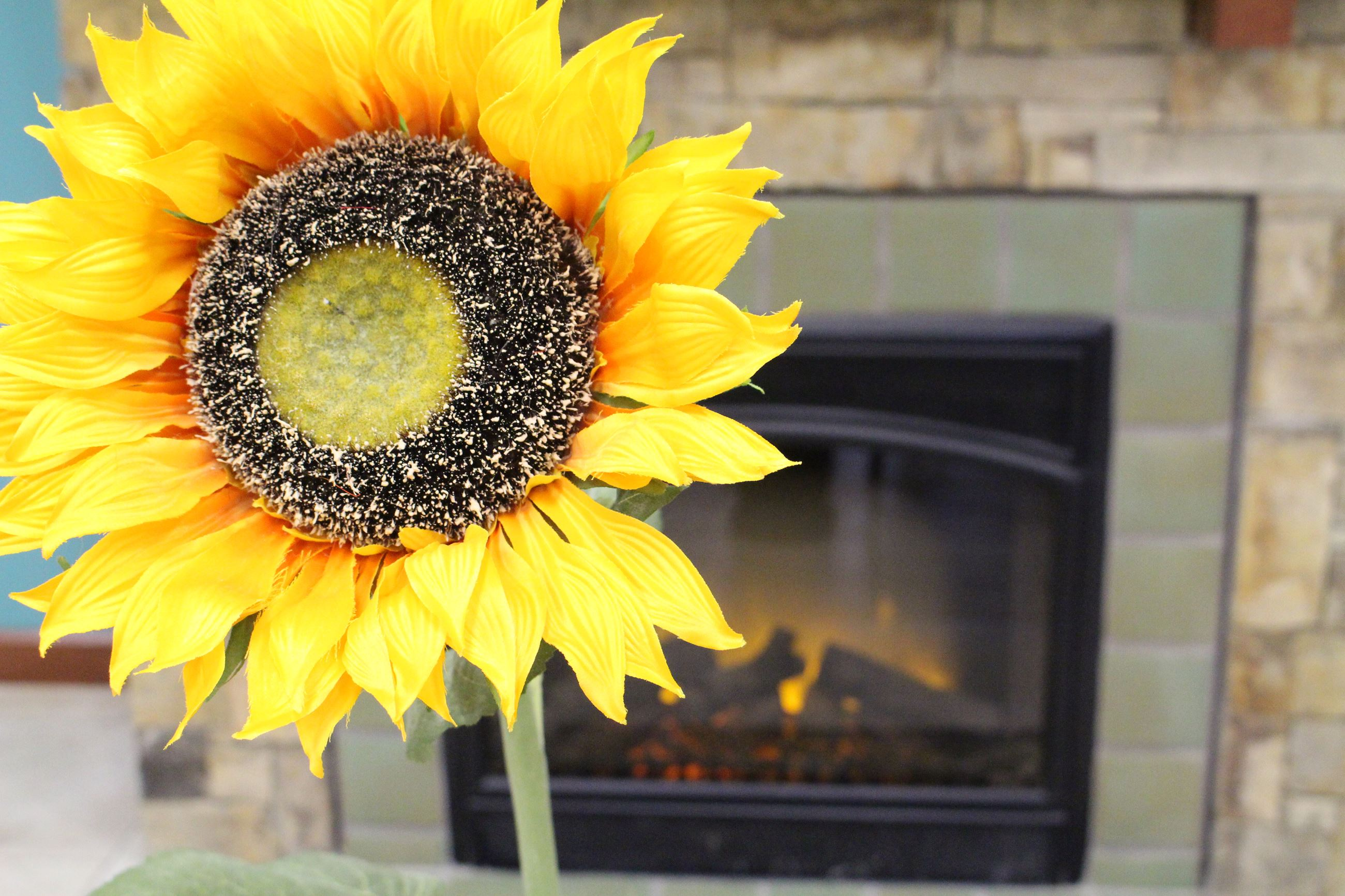 Closeup photo of a yellow sunflower with a fireplace in the background